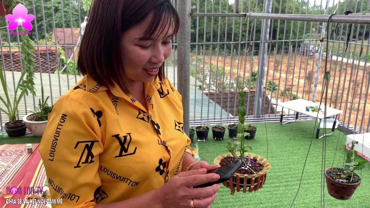 Sưu Tầm Phi Điệp 5CTPT và HỒNG YÊN THỦY tại Vườn LAN RỪNG HOÀNG PHƯỢNG @HOALAN 4U