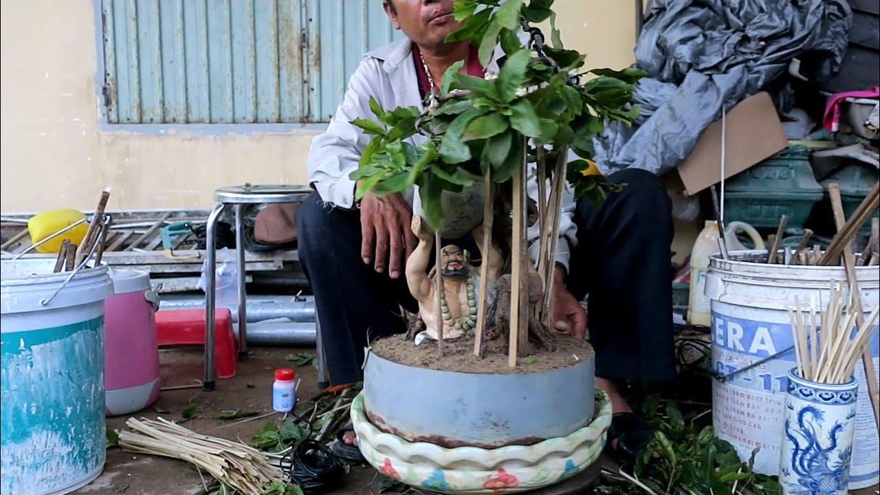 Tạo dáng mai bonsai phối tượng(Lê Quý bonsai)
