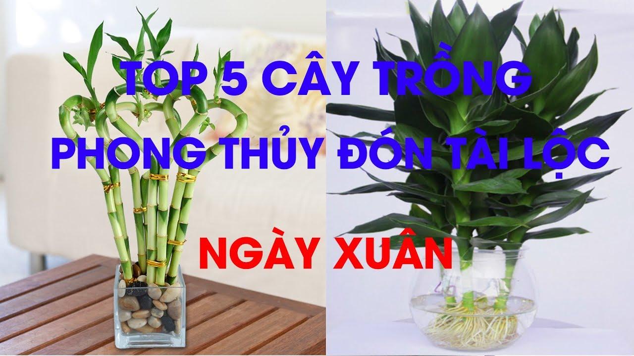 Top 5 cây trồng phong thủy đón tài lộc ngày xuân