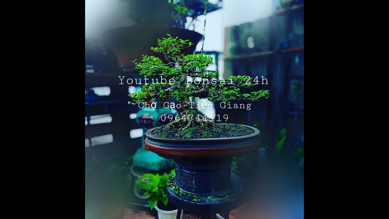 Vườn Bonsai 24h