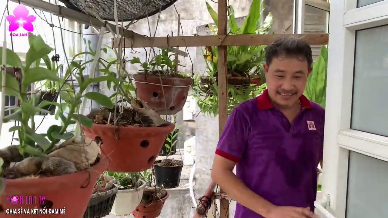 Vườn Lan BAN CÔNG Qúa Nóng Làm Sao Để Lan Phát Triển Bình Thường?