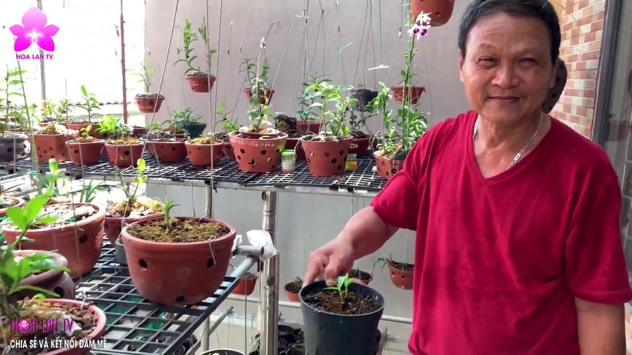 Vườn Lan Mini Trên Ban Công Nhà Bác Oánh Bát Tràng Gia Lâm Hà Nội