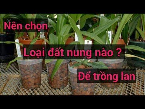 nên chon loại đất nung nào để trồng lan - Sổ tay hoa lan số 43