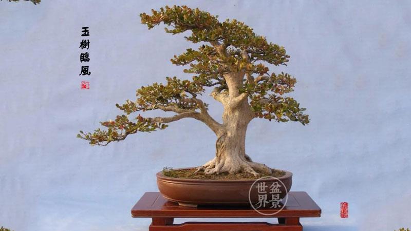 tuyet-chieu-sang-tao-bonsai-linh-nam-trung-quoc-sach-bonsai-linh-nam