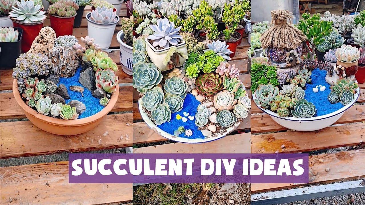 11 Succulent DIY ideas| 11 Ý tưởng trang trí sen đá cực đẹp| 多肉植物| 다육이들 | Suculentas