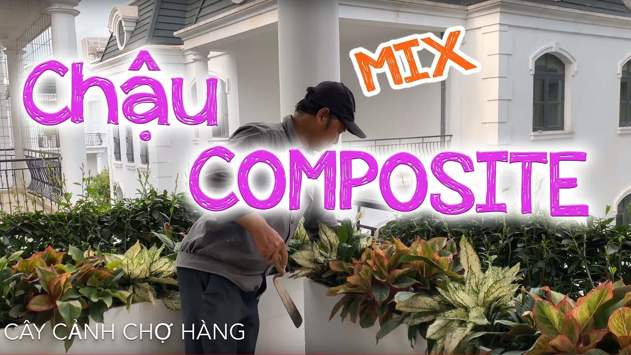 113. Cây Ngọc ngân, Phú Quý, Lan ý trồng chậu Composite - Cây cảnh Chợ Hàng