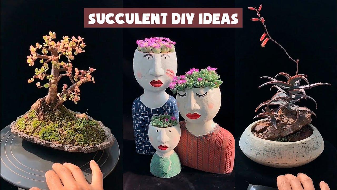 13 Succulent Bonsai DIY ideas| Ý tưởng trang trí sen đá phong cách bonsai| 多肉植物| 다육이들 | Suculentas