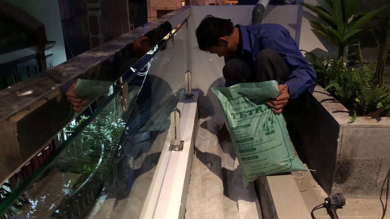 226. Trồng Dương xỉ, Chuối thiên điểu và trải tấm lát chống thấm Ngõ 28 Chu Văn An Hải Phòng