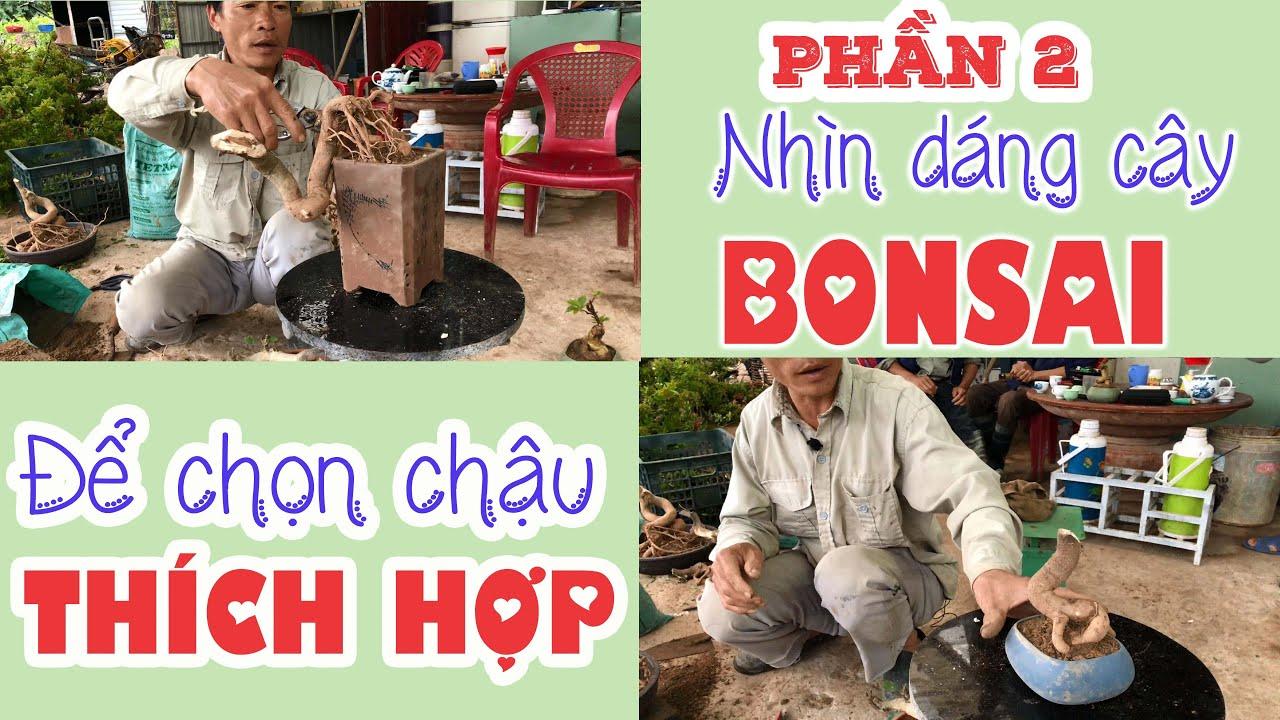 326. Chia Sẻ Cách Chơi Chậu Bonsai Mini Giấy Mỹ (Phần 2) - CÂY CẢNH CHỢ HÀNG   Cây Cảnh Hải Phong