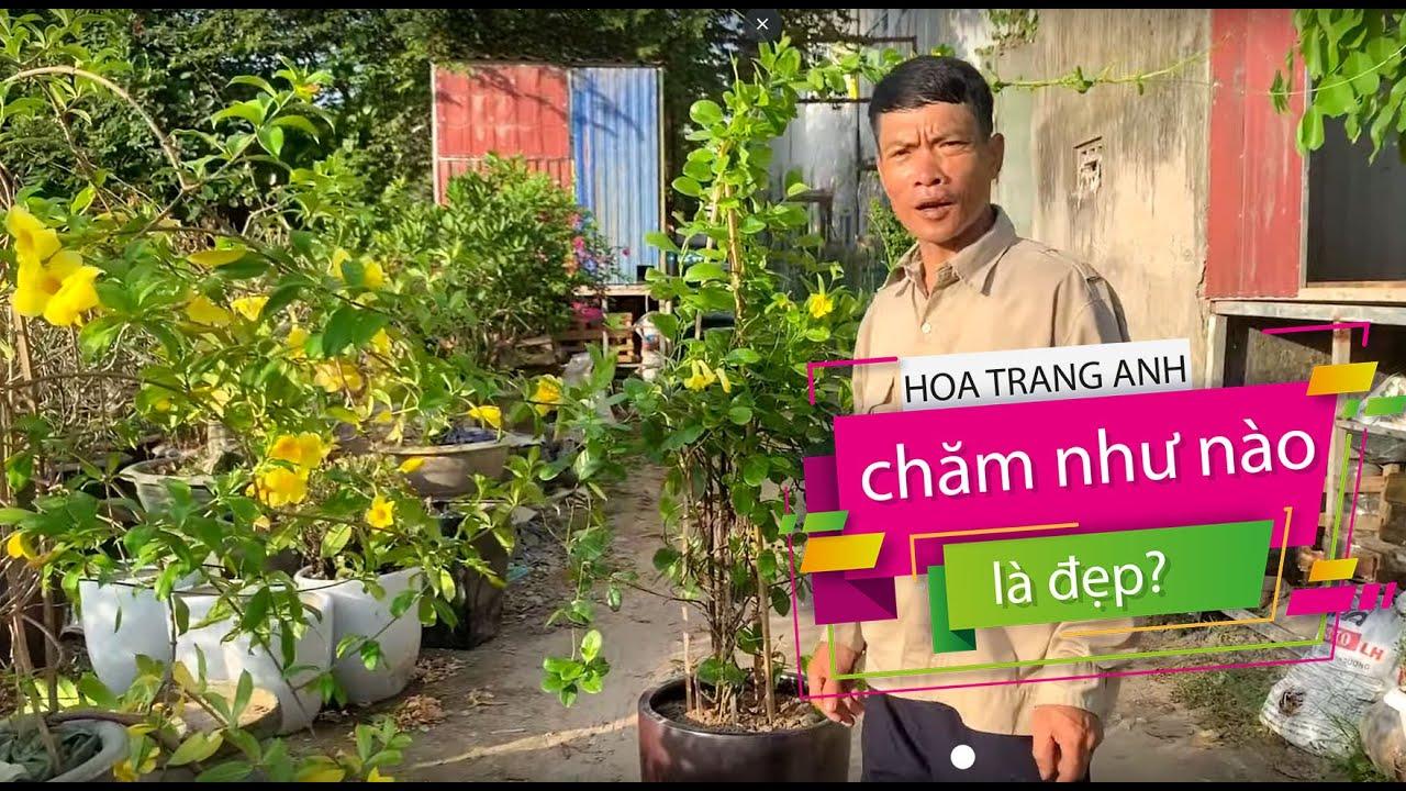 5. Hướng dẫn trồng và chăm sóc cây Hoa Trang Anh (Phần 1) - Cây cảnh Chợ Hàng