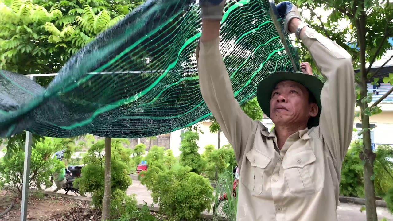93. Làm dàn lưới đen che nắng cây dược liệu Khôi Nhung - Cây cảnh Chợ Hàng