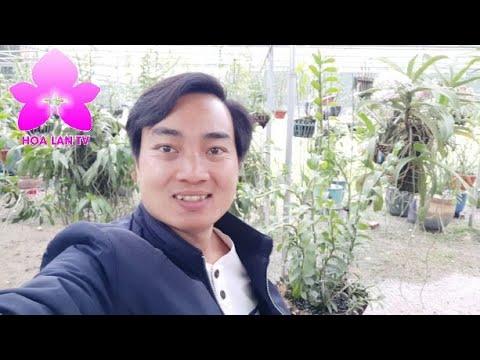 Bộ Sưu Tập Lan Thân Thủ Đột Biến Chất Lượng Vườn Lan Bình Liên Ở Đông La | HOALANTV
