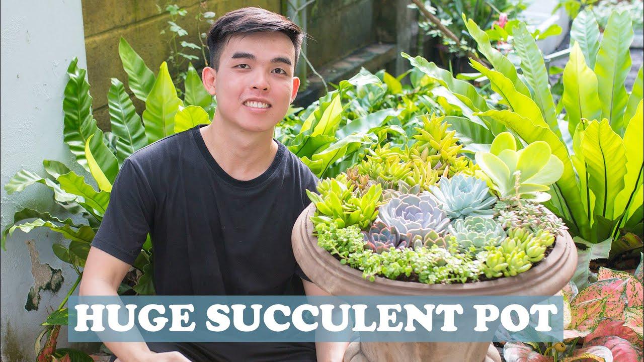GROW SUCCULENT IN HUGE CONTAINER| Trồng chậu sen đá siêu to| 多肉植物| 다육이들 | Suculentas