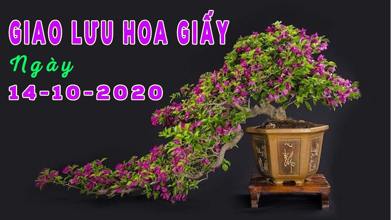 Giao Lưu Bonsai 14-10-2020 | 0981.0981.72 | Tiktok CÂY CẢNH CHỢ HÀNG | Hải Phòng