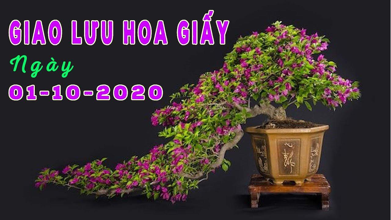Giao Lưu Bonsai Hoa Giấy Mỹ - 0981.0981.72 - 01/10/2020 | TikTok CÂY CẢNH CHỢ HÀNG | Hải Phòng