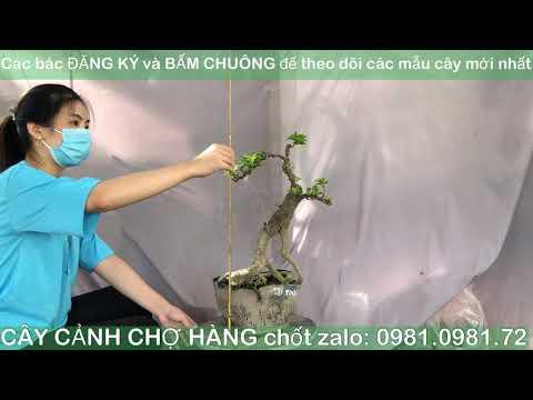 Giao lưu Bonsai 10-10-2020 | 0981.0981.72 | Tiktok CÂY CẢNH CHỢ HÀNG | Hải Phòng