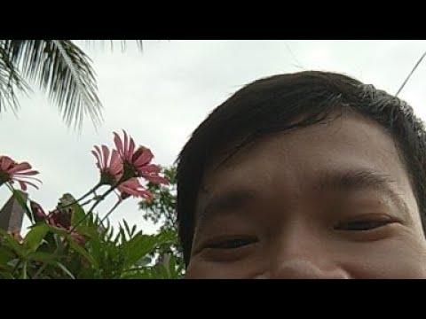 Hoa Cỏ Vườn Nhà
