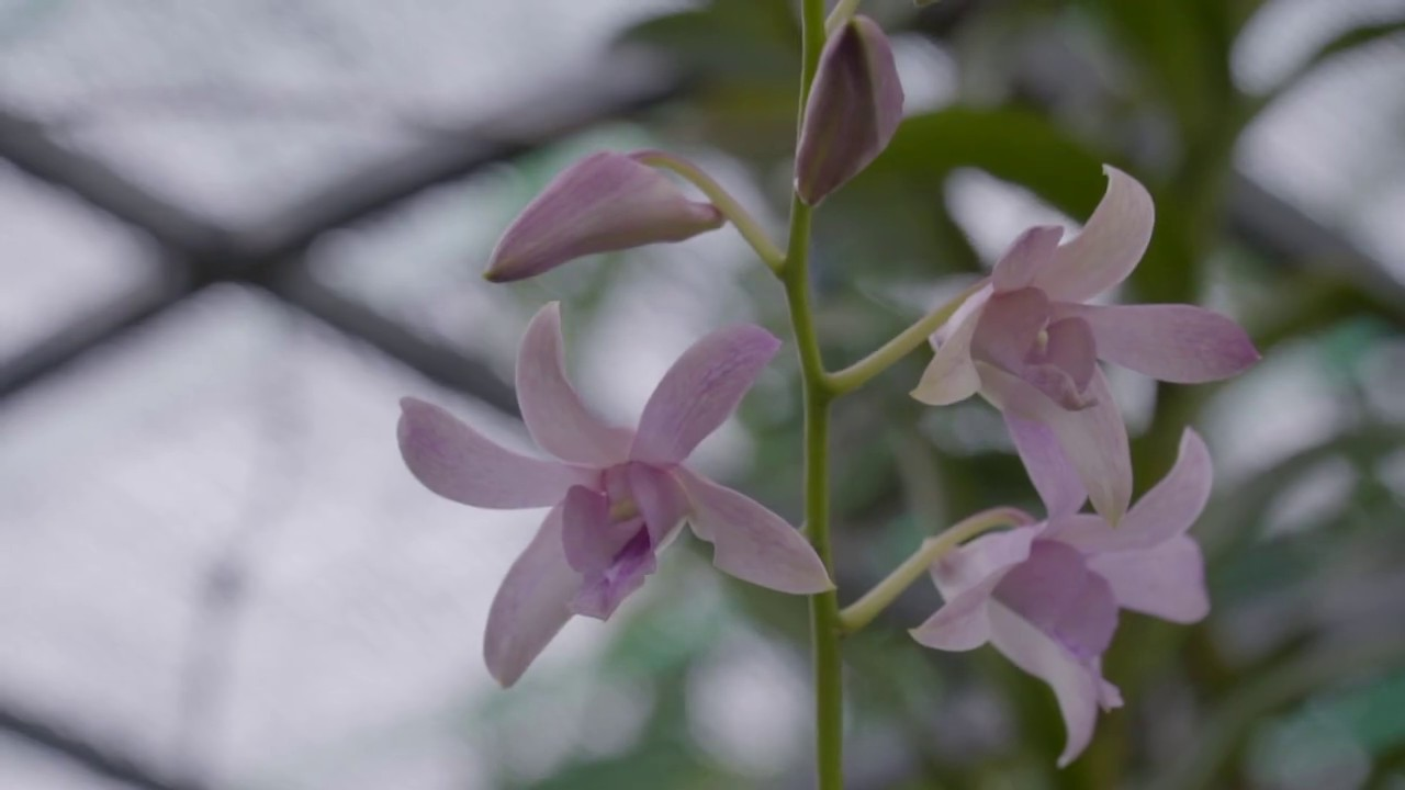 Hoa linh tinh trong vườn nhà mình | www.vuonsenda.vn