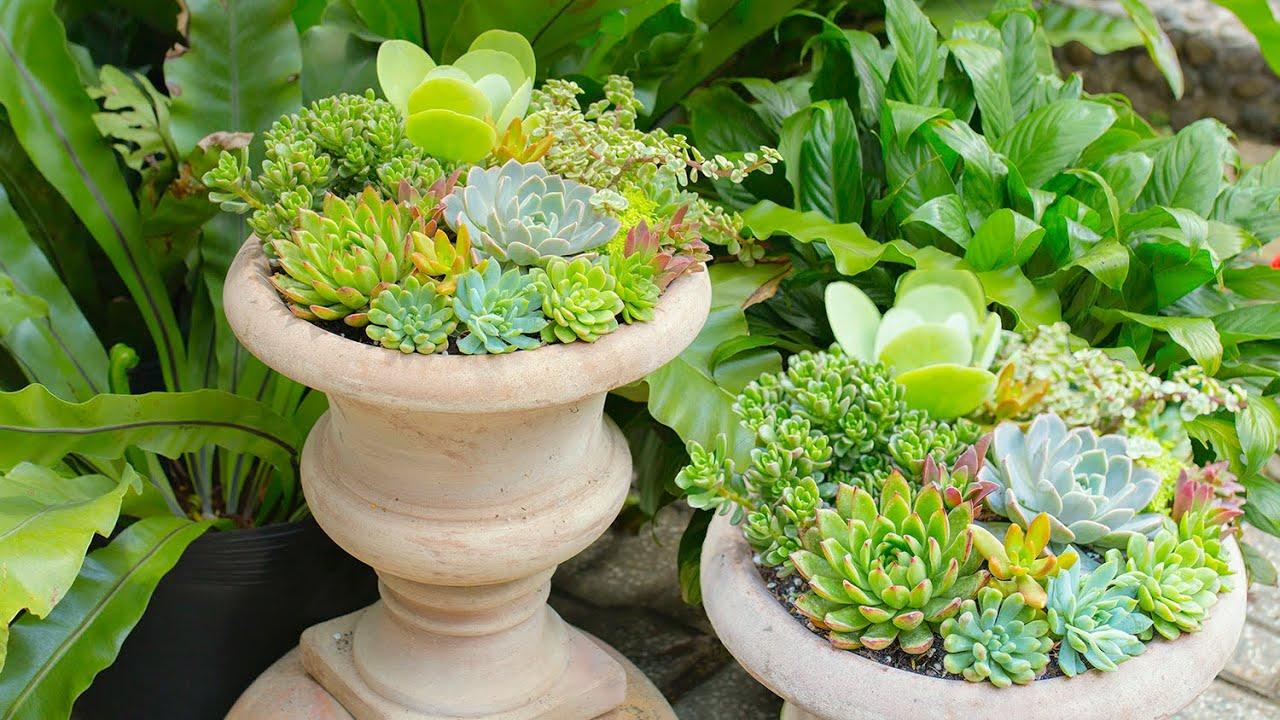 How I Make a Succulent Arrangement! 🌵😊 Cách mix một chậu sen đá thật đẹp| 多肉植物| 다육이들 | Suculentas