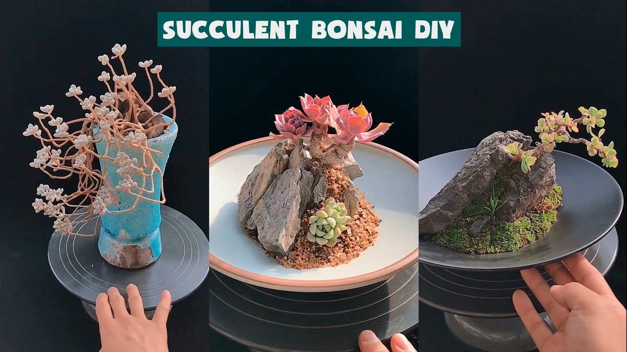 How I make a Succulent Bonsai DIY| Cách làm sen đá bonsai tuyệt đjep| 多肉植物| 다육이들 | Suculentas