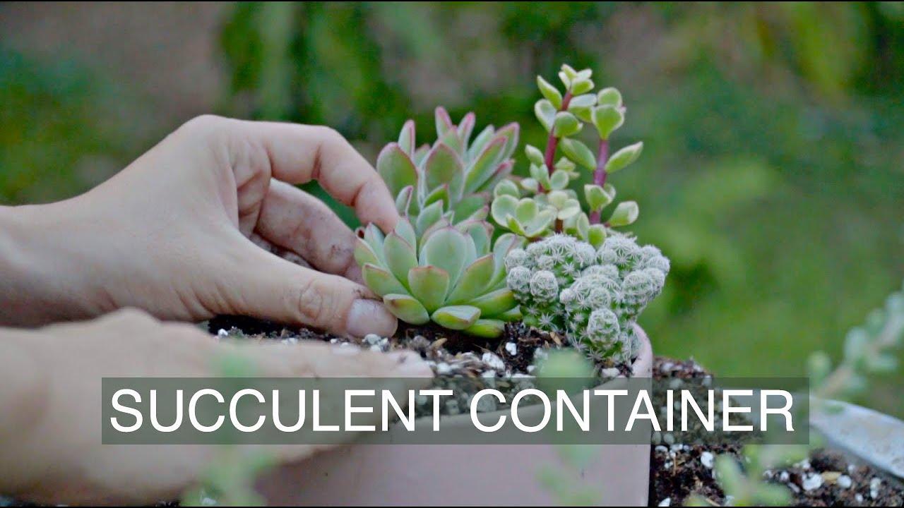 How to make a succulent container - Short film| Cách mix một chậu sen đá|  多肉植物 |  다육이들