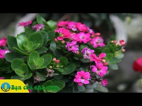 Hướng dẫn chi tiết cách chăm sóc các loại cây, hoa cảnh ngày tết
