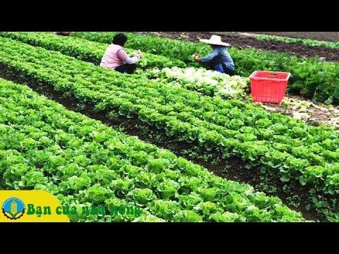 Hướng dẫn chi tiết cách chăm sóc các loại rau màu ngày tết