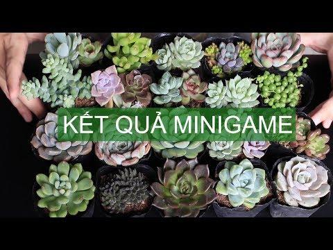Kết quả minigame ngày 17/8/2019| www.vuonsenda.vn