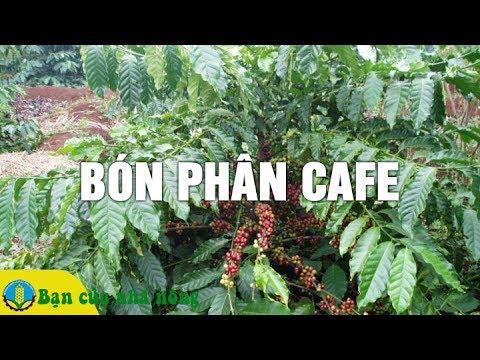 Kinh Nghiệm Bón Phân Hữu Cơ Cho Cây Cafe Đem Lại Năng Xuất Cao