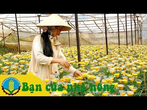 Kỹ thuật trồng và chăm sóc các loài hoa đón tết