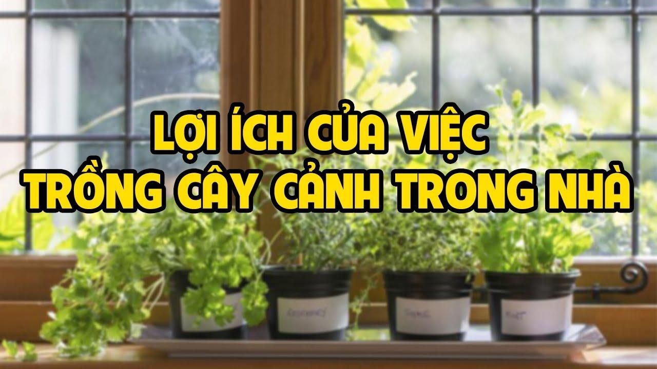 Lợi ích của việc trồng cây cảnh trong nhà