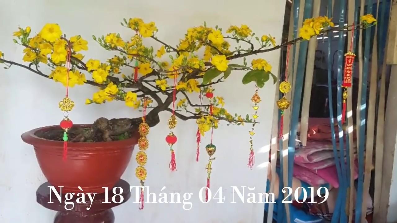 Mai Phú Tân - Mai Thủ Đức | Giá 250 K- 150 K - 80K | 0389 578 456 | 18/04/19