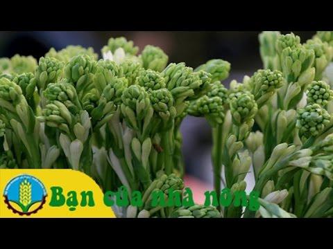 Mô hình, kỹ thuật trồng và chăm sóc hoa huệ cho ngày tết