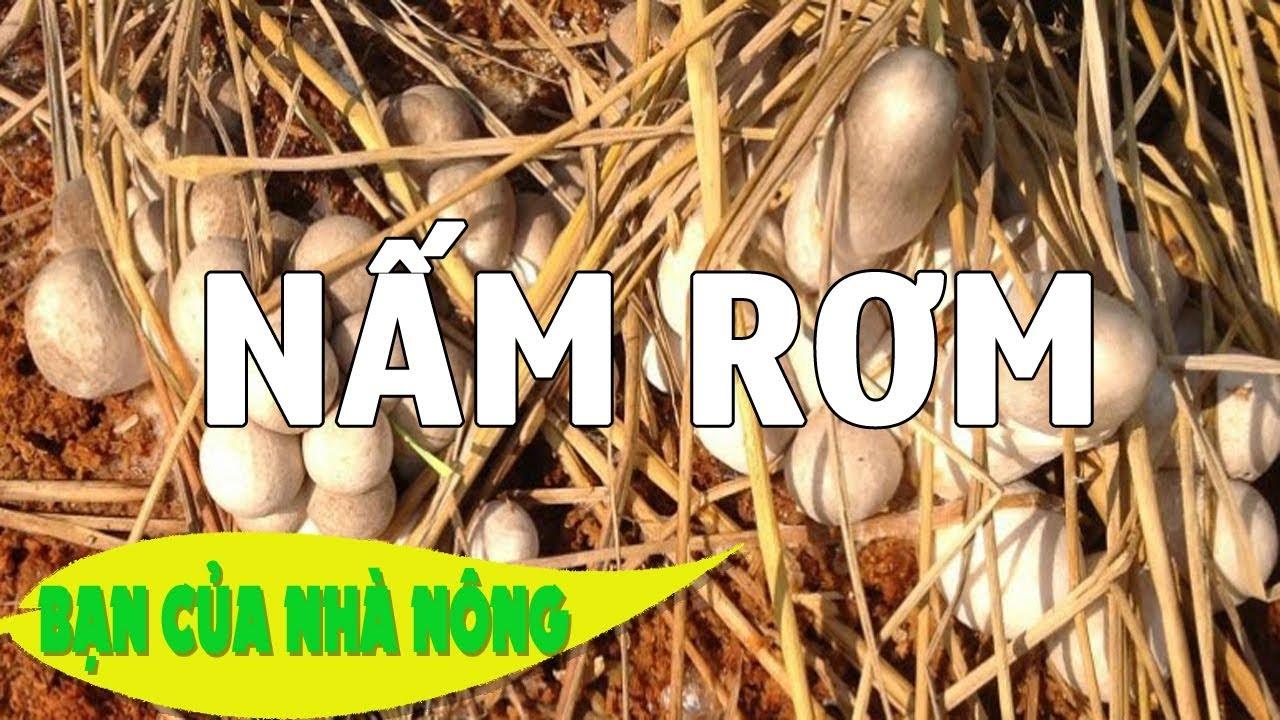 Mô hình trồng nấm rơm trong nhà mang lại hiệu quả kinh tế cao / BẠN CỦA NHÀ NÔNG