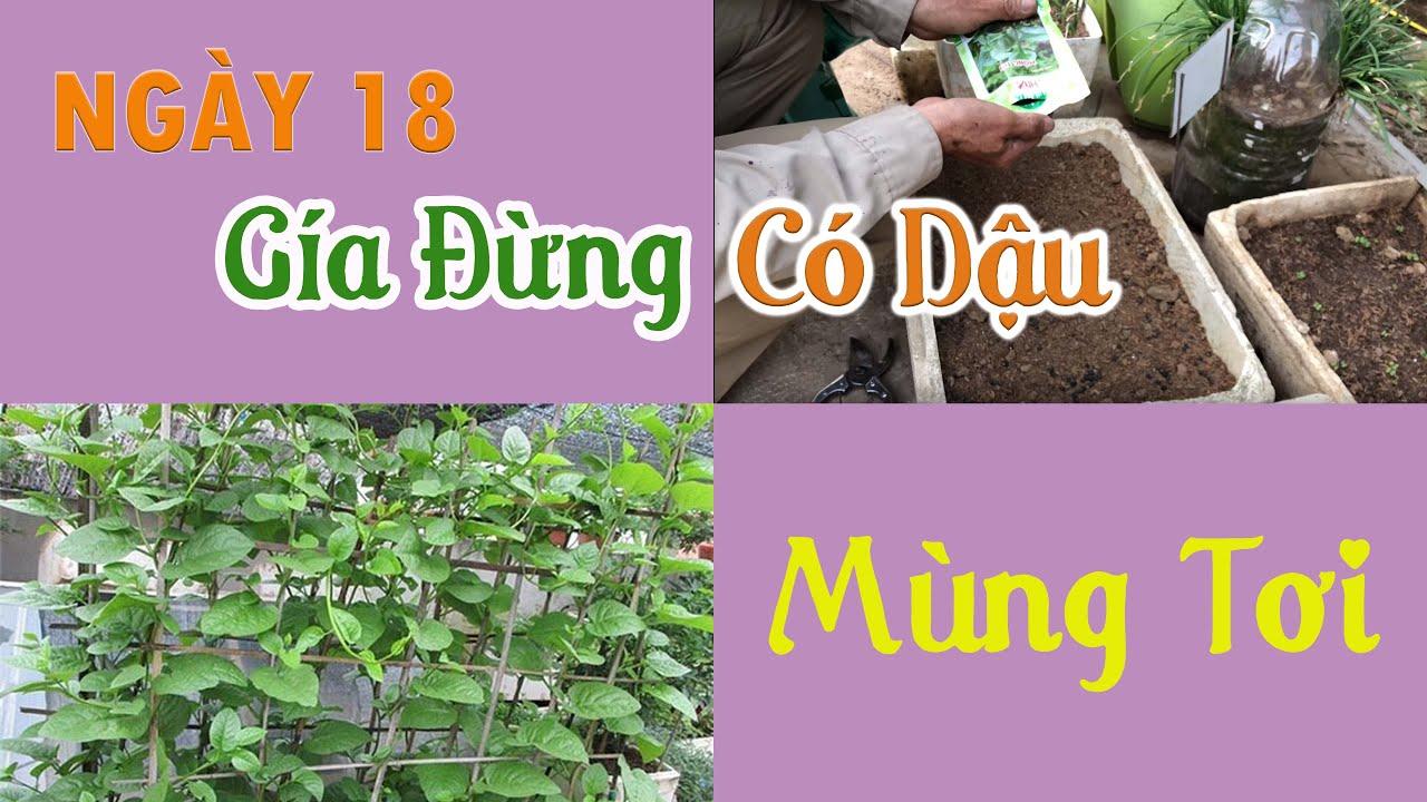 Ngày 18 - Gieo Hạt Mùng Tơi & Ngắm Vườn Rau - Trồng Rau Tại Nhà   Trồng Rau Sân Thượng
