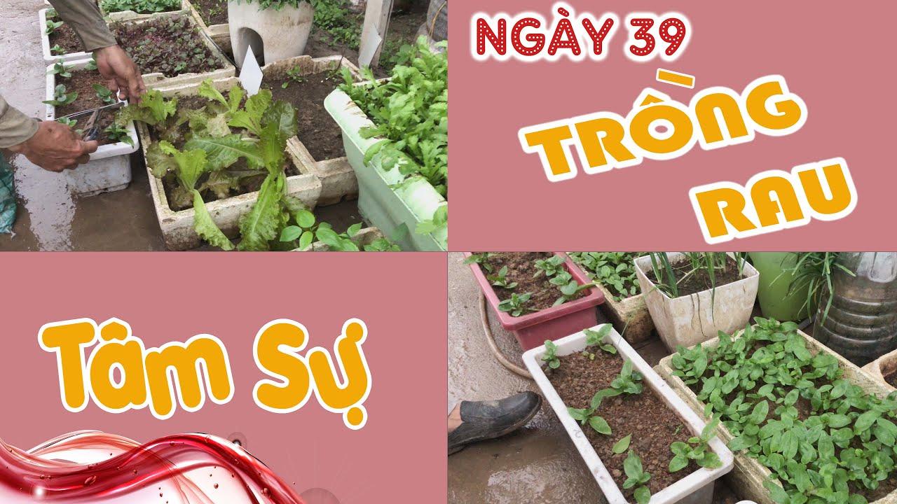 Ngày 39. Tâm Sự Vườn Rau 39 Ngày - Trồng Rau Tại Nhà   Trồng Rau Sân Thượng - CAYCANHCHOHANG.com