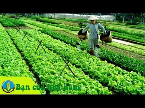 Những biện pháp phòng trừ sâu bệnh cho rau màu hiệu quả