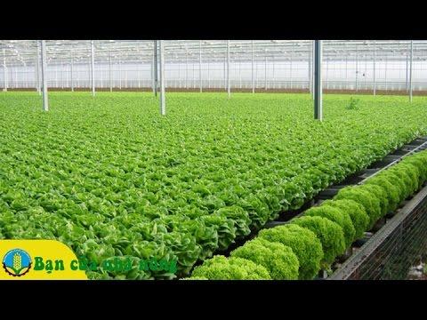 Những điều nông dân cần biết khi xây dựng mô hình tròng rau sạch an toàn