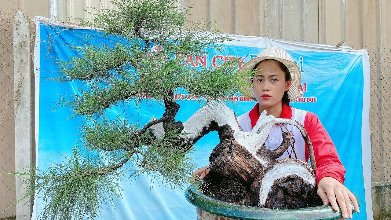 Pan City 111 | Đam mê giao lưu cây kiểng vườn bonsai mini Sài gòn ngày 22/08/2020. Giá bình dân