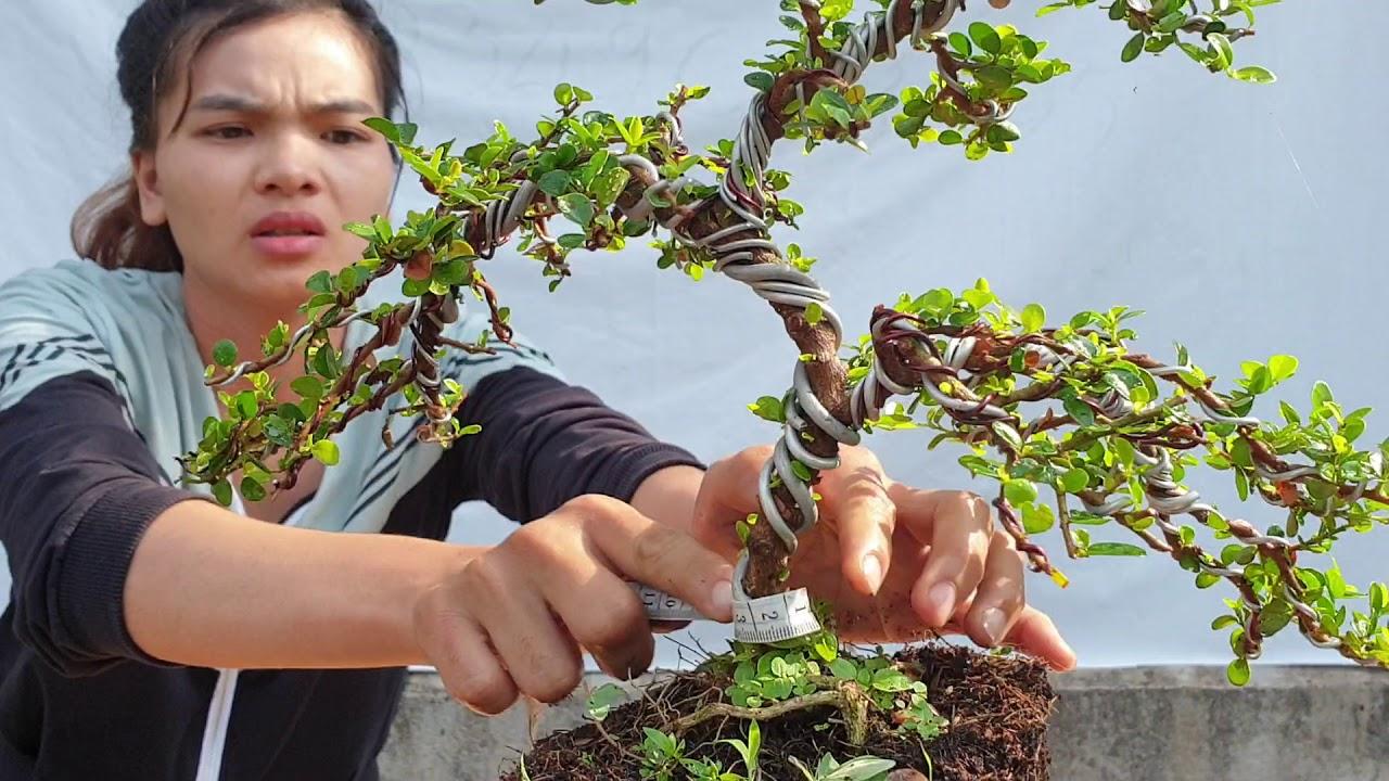 Pan City số 12 | Báo giá dàn bonsai mini đang bông nở rộ có đầy đủ các loại giá hạt dẻ | Bonsai