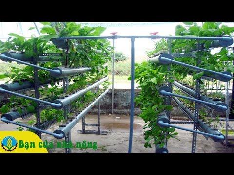 Quy trình lắp đặt hệ thống rau thủy canh hồi lưu tại nhà thật đơn giản mà tiết kiệm