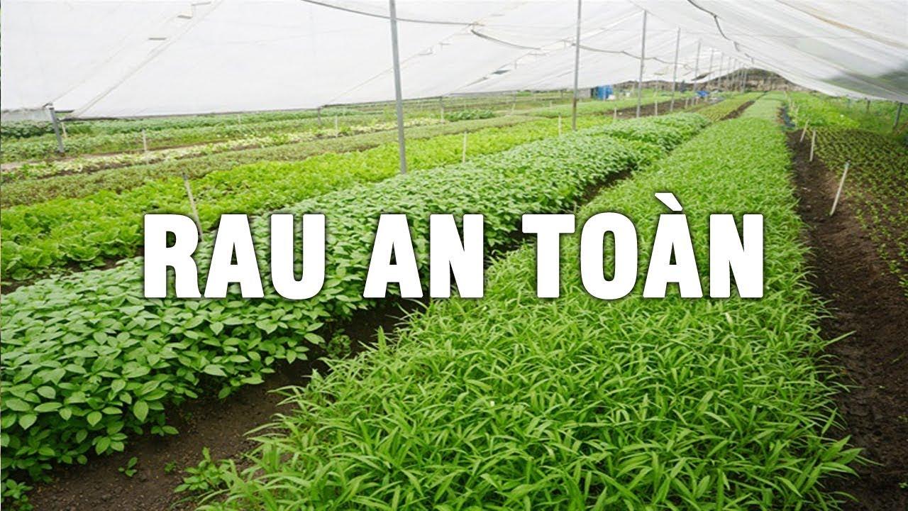 Quy trình sản xuất rau an toàn - Thành công không đơn giản như mọi người nghĩ