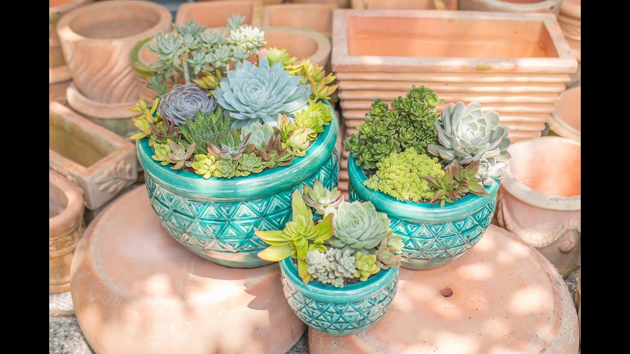 Succulent Arrangement Idea| Ý tưởng mix sen đá với bộ chậu sứ| 多肉植物| 다육이들 | Suculentas