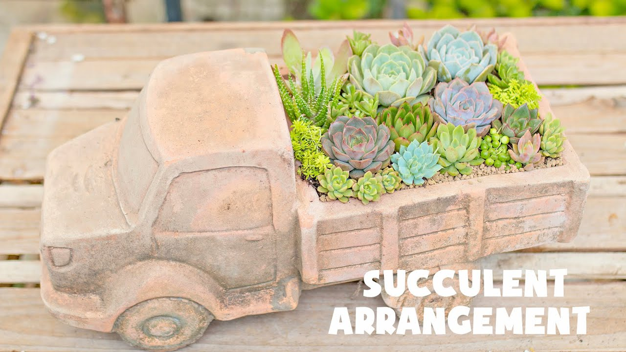 Succulent Arrangement Idea| Ý tưởng mix sen đá với chậu xe tải| 多肉植物| 다육이들 | Suculentas