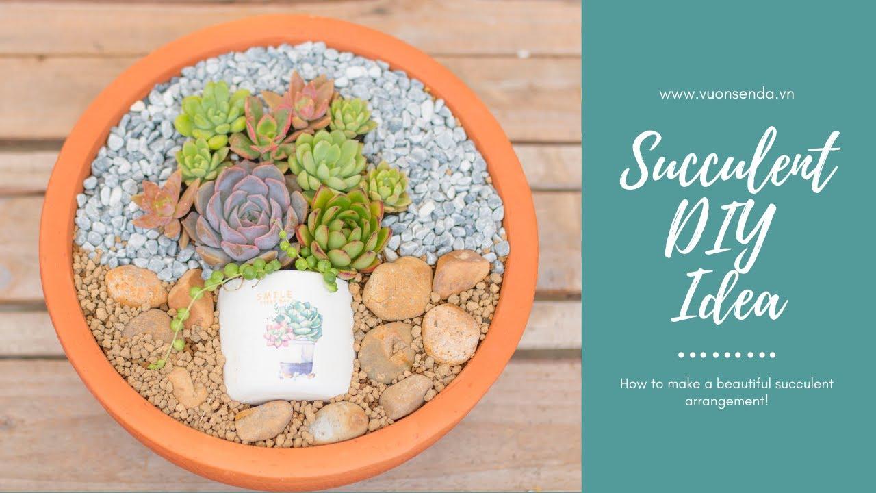 Succulent Arrangement Idea| Ý tưởng trồng một chậu sen đá thật đẹp| 多肉植物| 다육이들 | Suculentas