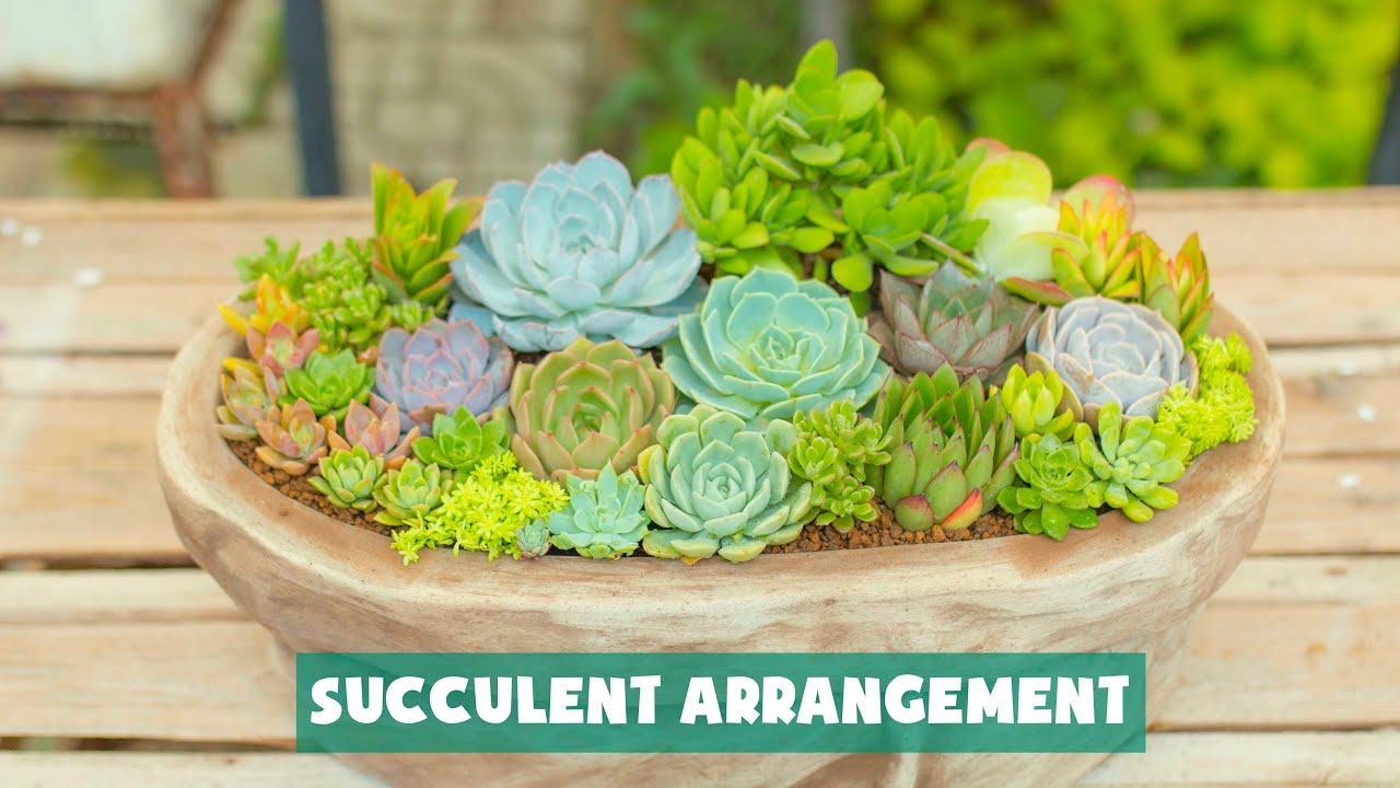 Succulent Arrangement Inspiration| Ý tưởng phối sen đá| 多肉植物| 다육이들 | Suculentas
