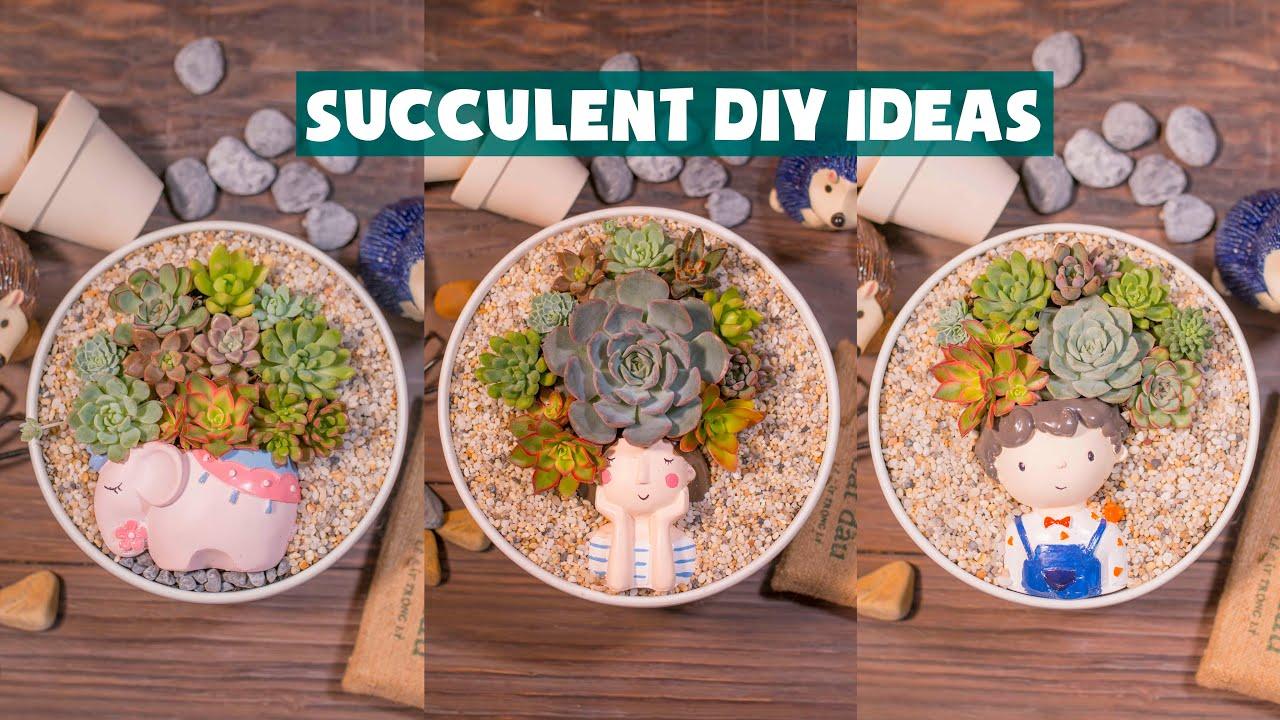 Succulent DIY Ideas| Ý tưởng trang trí sen đá tuyệt đẹp| 多肉植物| 다육이들 | Suculentas