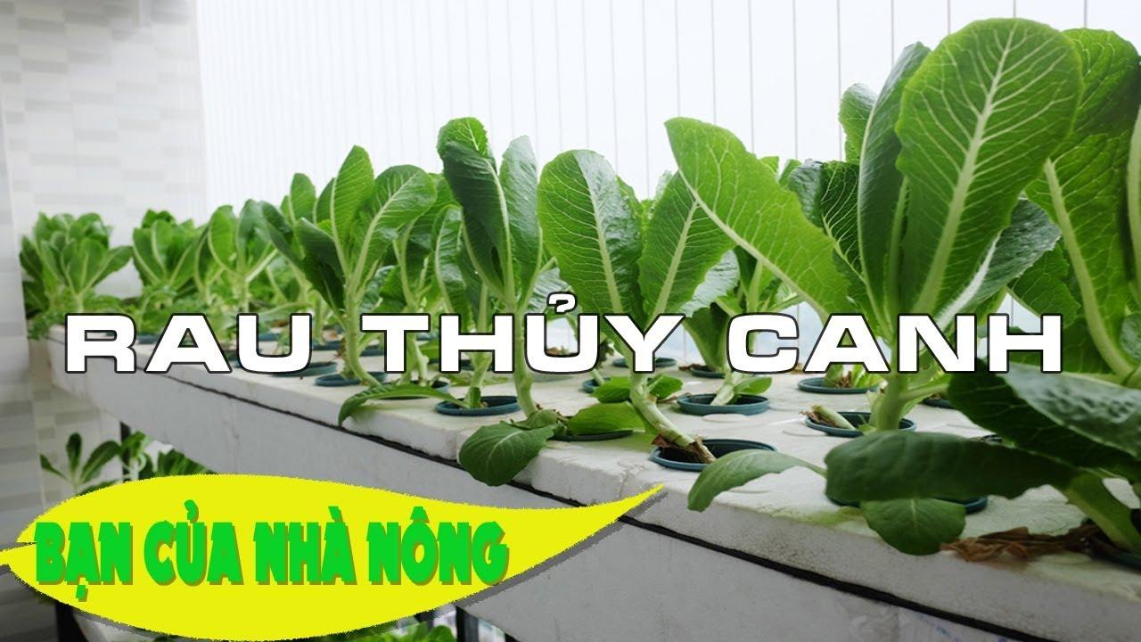 Tham khảo mô hình trông RAU THỦY CANH triệu đô theo chuẩn Vietgap / Bạn của nhà nông