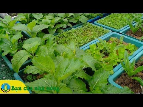 Tham khảo một số mô hình làm giàu từ trồng rau sạch