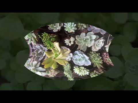 Vuki Garden| Các loại sen đá | Sen đá đồng giá 15k (update 28/11/2019)